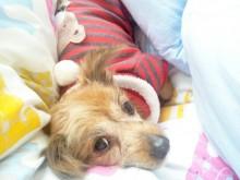 Odessa at her sitter's