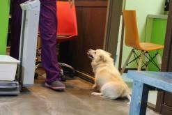 She loves the vet staff.