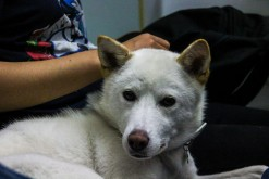 Adopted! 11 June 2014