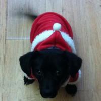 Christmas Richie!