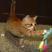Kittens for adoption in Jeonju, South Korea