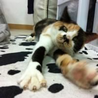 On her favorite rug