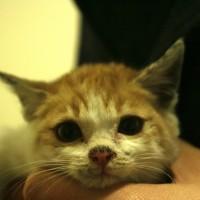 Kitten in Jeonju for adoption