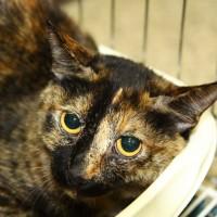 cat for adoption in Jeonju
