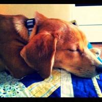 Asia, sleeping