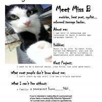 cat, vaccinated, fixed, seoul