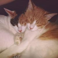 Sleepy Arthur and Scully