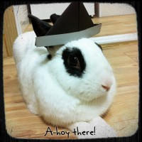 Friendly rabbit in need of a new home.