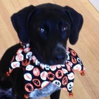 Happy Halloween Pepper