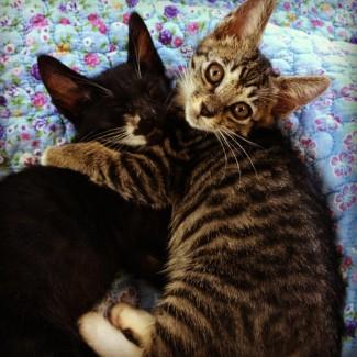 kitten on the right