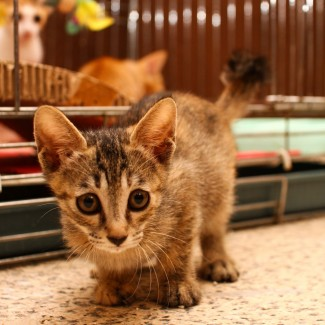Adorable and playful kittens up for adoption in Jeonju