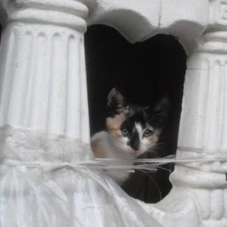 spotted kitty Shanti