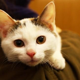 Kitten for adoption in South Korea