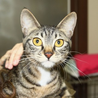 Cat for adoption in South Korea