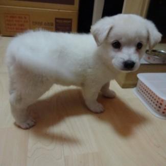 Cute teddy bear Eddie.