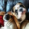 BulldogLvr89's picture