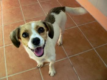 Smiling little dog