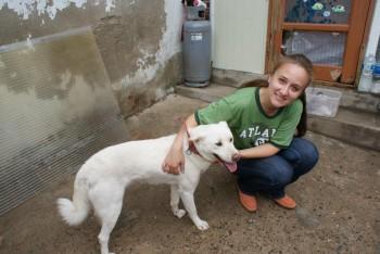 Jindo and shelter volunteer