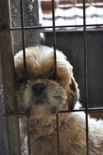 Dog looking through bars of cage