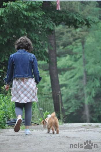 Shelter volunteer walking a dog