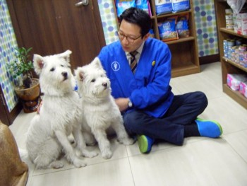 Two dogs with veterinarian