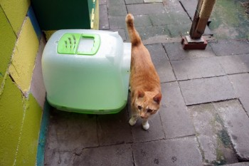 Cat standing near litter box