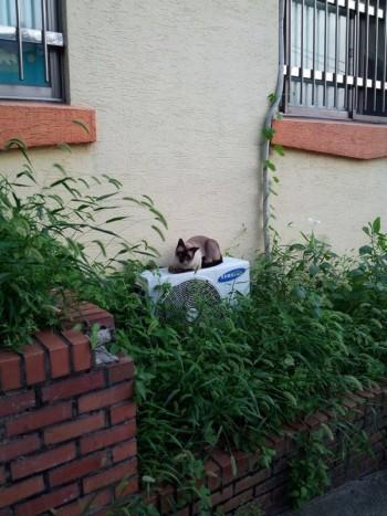 Cat in alley